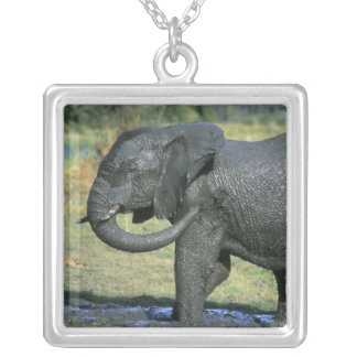 Éléphant africain, (africana de Loxodonta), boue Collier