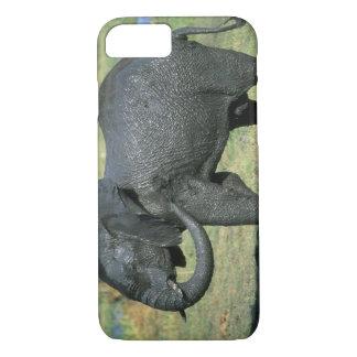 Éléphant africain, (africana de Loxodonta), boue Coque iPhone 8/7