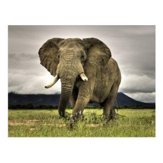 Éléphant africain carte postale