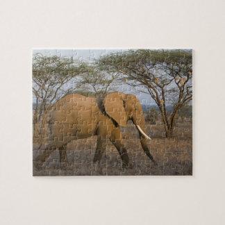 Éléphant africain chez Samburu NP, Kenya Puzzle