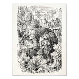 Éléphant africain de 1800s vintages - éléphants photographie d'art