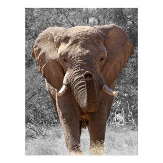 Éléphant africain de buisson impression photo