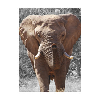Éléphant africain de buisson toile
