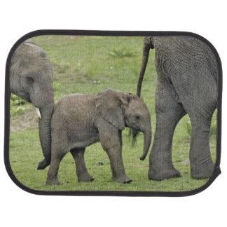 Éléphant africain femelle avec le bébé, Loxodonta Tapis De Sol