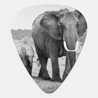Éléphant africain femelle et trois veaux, Kenya Onglet De Guitare
