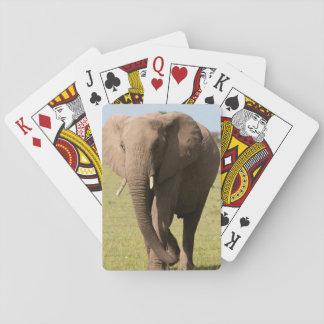 Éléphant africain (Loxodonta Africana), Maasai Jeux De Cartes