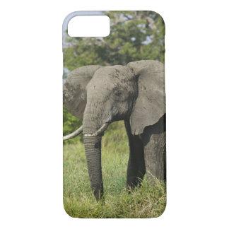 Éléphant africain, masai Mara, Kenya. Loxodonta Coque iPhone 8/7