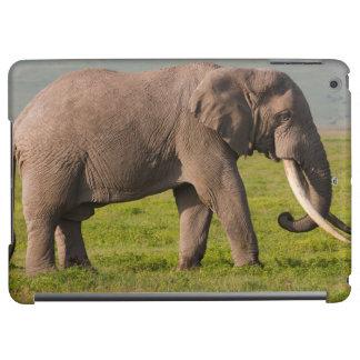 Éléphant africain, région de conservation de