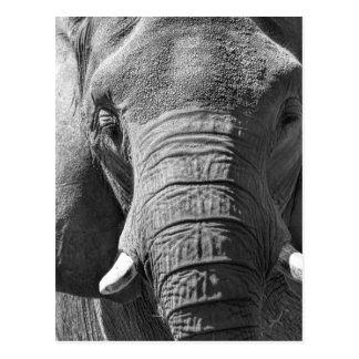 Éléphant asiatique en noir et blanc carte postale