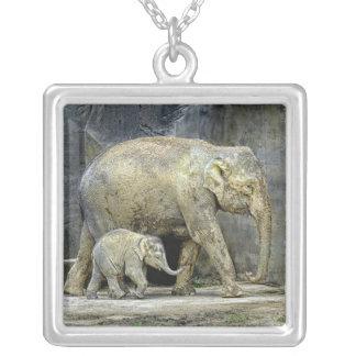 Éléphant avec le collier nouveau-né