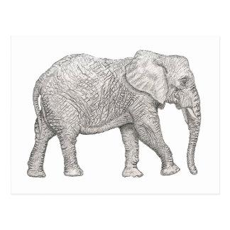 Éléphant coupé carte postale