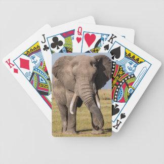 Éléphant dans une pose agressive jeu de cartes