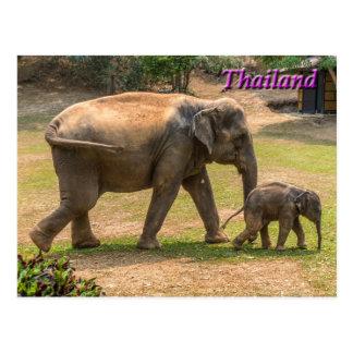 Éléphant de mère et de bébé, carte postale de la