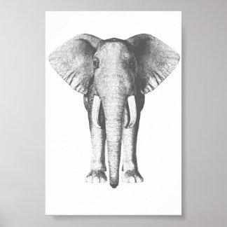 Éléphant en noir et blanc poster