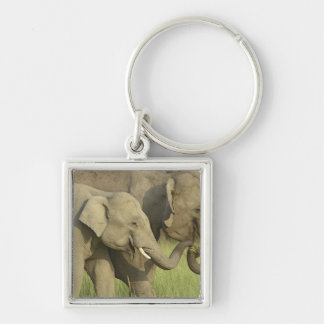 Éléphant indien/asiatique demandant la nourriture  porte-clé carré argenté