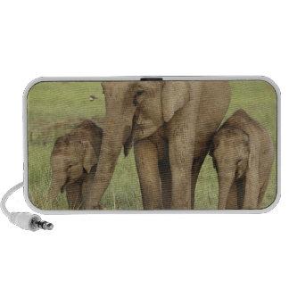 Éléphant indien/asiatique et jeunes ceux, Corbett Mini Haut-parleurs