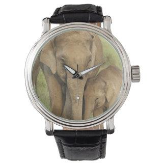 Éléphant indien/asiatique et jeunes un, Corbett Montres Bracelet