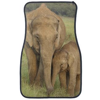 Éléphant indien/asiatique et jeunes un, Corbett Tapis De Sol