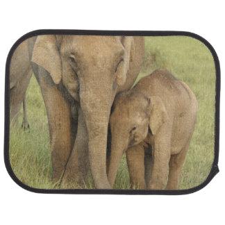 Éléphant indien/asiatique et jeunes un, Corbett Tapis De Voiture