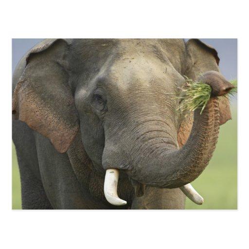 Toile de nourriture d'éléphant asiatique