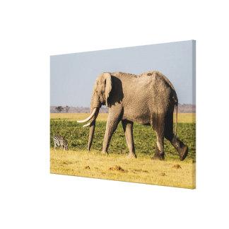 Éléphant marchant par un point d'eau toile