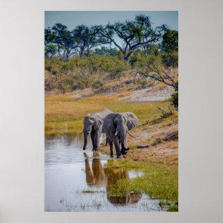 Éléphants à un point d'eau poster