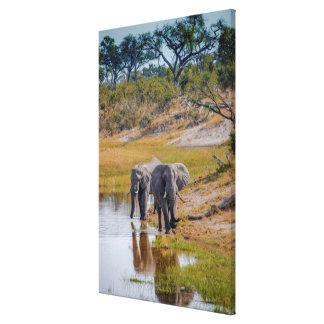 Éléphants à un point d'eau toile