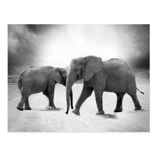 Éléphants africains carte postale