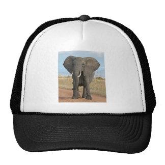 Éléphants africains d'animaux de destin de jungle casquettes de camionneur
