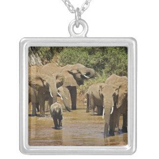 Éléphants africains, Loxodonta Africana, Samburu Pendentif Carré