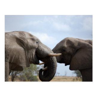 Éléphants chez Kruger Carte Postale