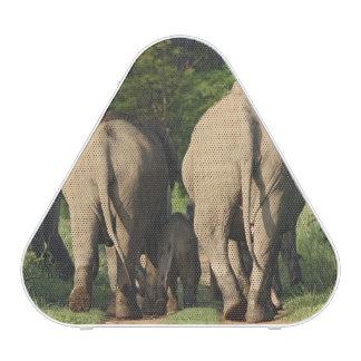 Éléphants d Asie sur la voie de jungle Corbett