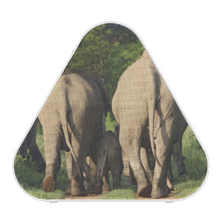 Éléphants d'Asie sur la voie de jungle, Corbett Haut-parleur Bluetooth