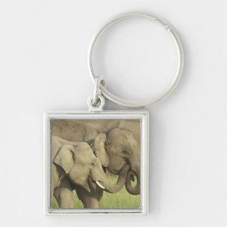 Éléphants indiens/asiatiques partageant a porte-clé carré argenté