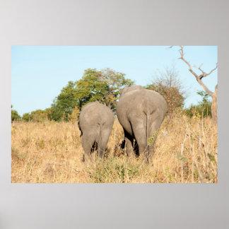 Éléphants marchant loin poster