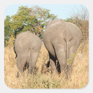 Éléphants marchant loin sticker carré