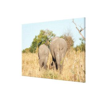 Éléphants marchant loin toile