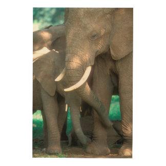 Éléphants protégeant des jeunes impression sur bois