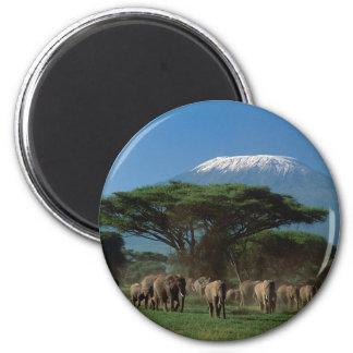 Elphants du mont Kilimandjaro Aimant
