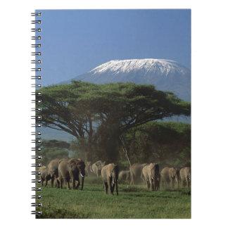 Elphants du mont Kilimandjaro Carnet