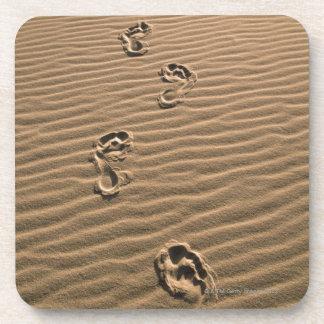 Empreintes de pas humaines sur la plage sablonneus sous-bock