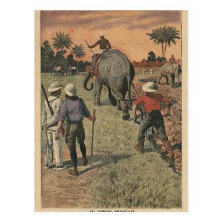 En français Congo, l'éléphant s'est exercé au Cartes Postales