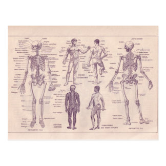 Encyclopédie française 1920, anatomie humaine carte postale