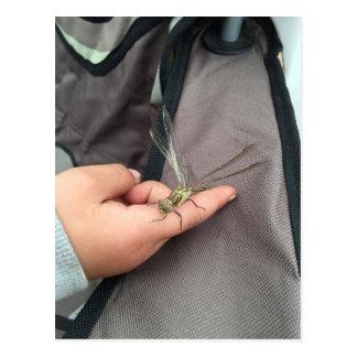 Enfant avec la carte postale de libellule