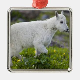 Enfant de chèvre de montagne au passage de Logan Ornement Carré Argenté