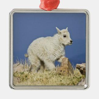 Enfant ou bébé de chèvre de montagne (Oreamnos Ornement Carré Argenté