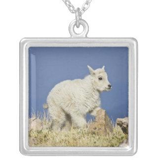 Enfant ou bébé de chèvre de montagne (Oreamnos Pendentif Carré