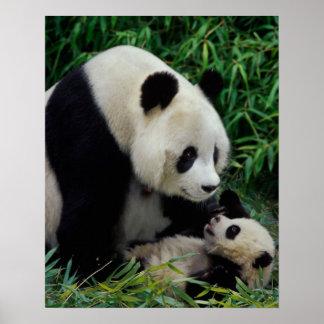 Enfantez le panda et le bébé dans le buisson en ba affiches