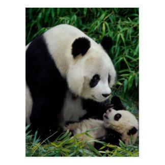Enfantez le panda et le bébé dans le buisson en carte postale