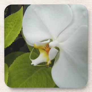 Ensemble floral blanc de dessous de verre